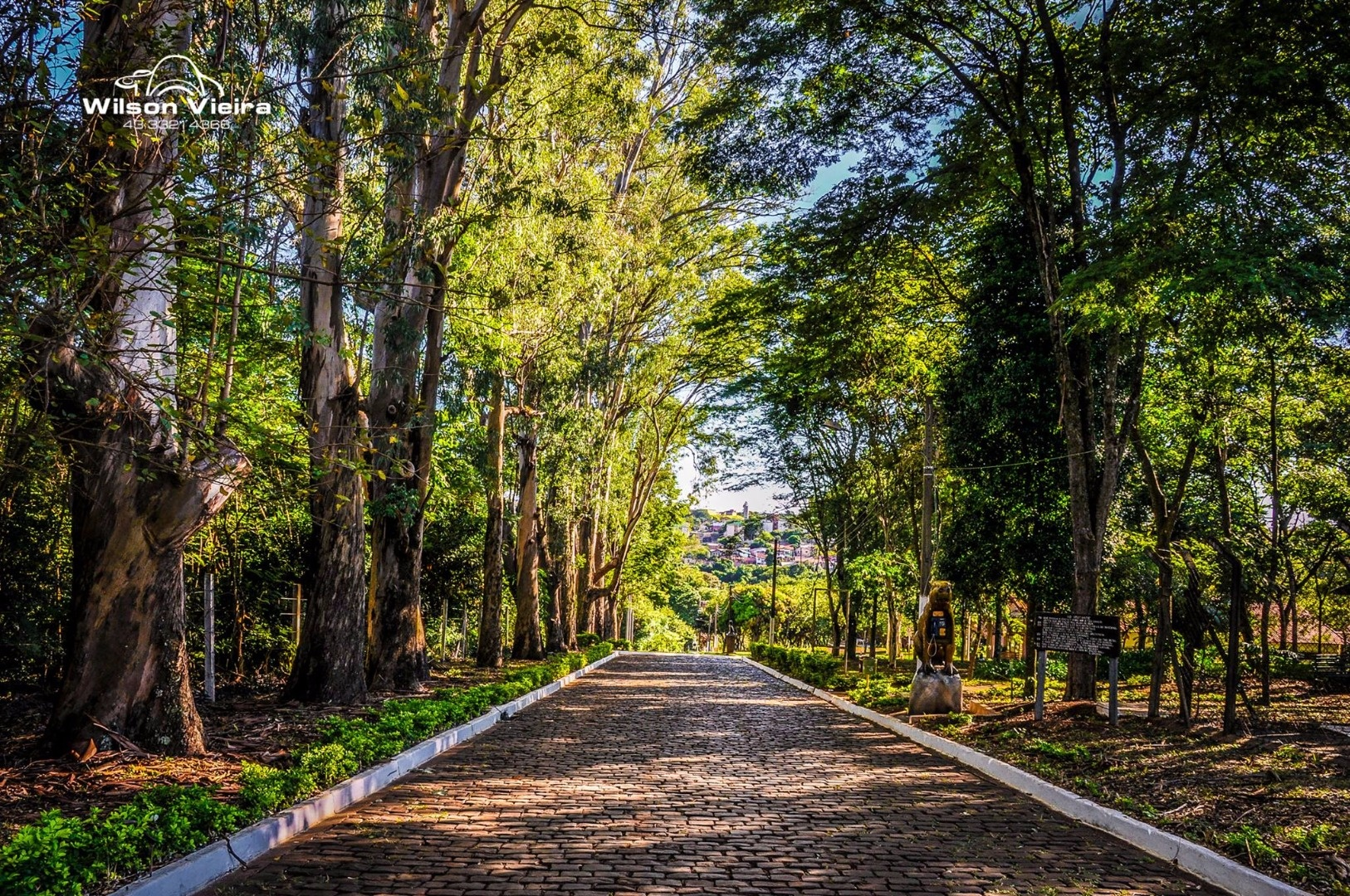 Parque Arthur Thomas em Londrina