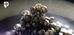 Kviar é tratamento de luxo na Farmácia Passiphlora em Londrina