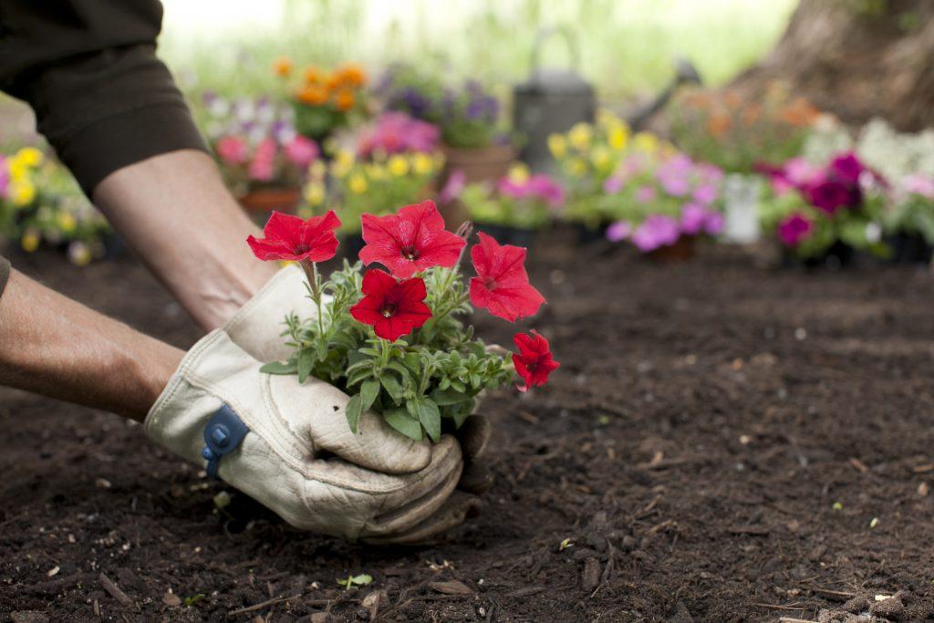 Saiba como ter flores no jardim o ano inteiro