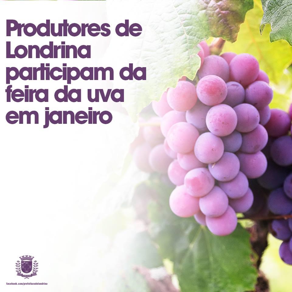 Produtores locais participam da Feira da Uva em janeiro