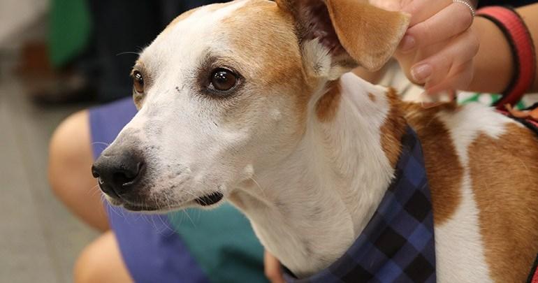Lei contra os maus-tratos de animais entra em vigor no município
