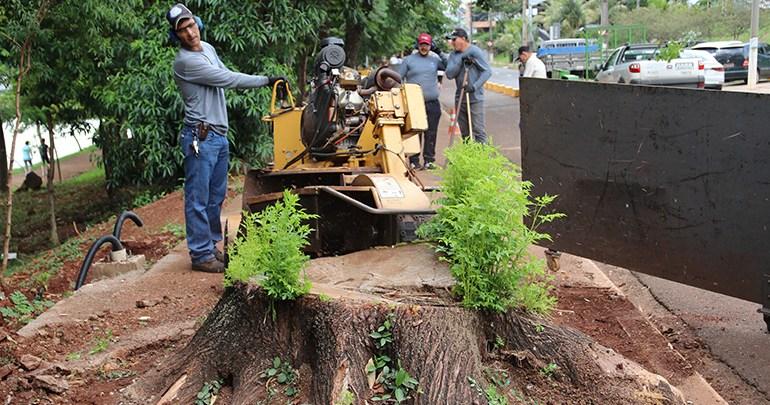 Prefeitura inicia destoca e replantio de árvores em Londrina